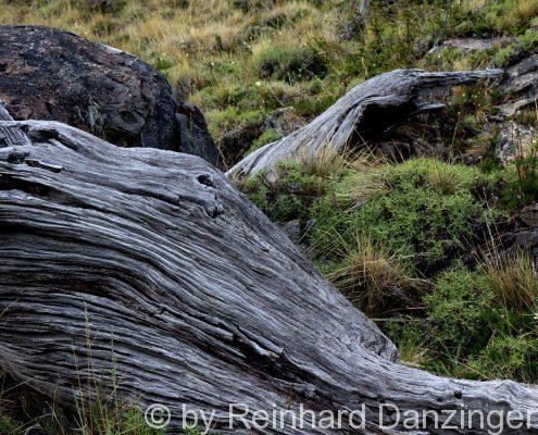 2013-12-02-Nationalpark-Fitz-Roy-(20)