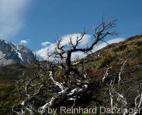 2013-12-04-Wanderungen-im-NP-Paine-(191)