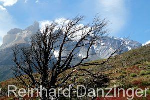 2013-12-04-Wanderungen-im-NP-Paine-(196)