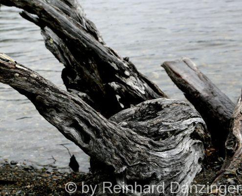 2013-12-09-NP-Tierra-del-Fuego-(14)