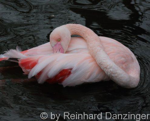 2016-02-09-Flamingos-(46)