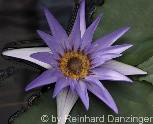 Blüten-001