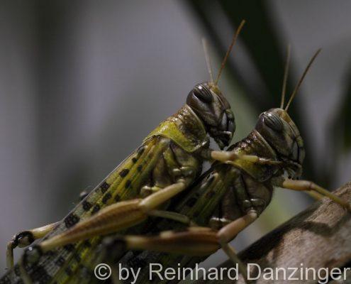 Insekten-001